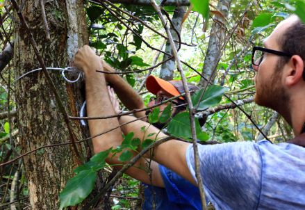 Myself and Nick attaching an acoustic monitor to a tree at one of the OKEON sites.